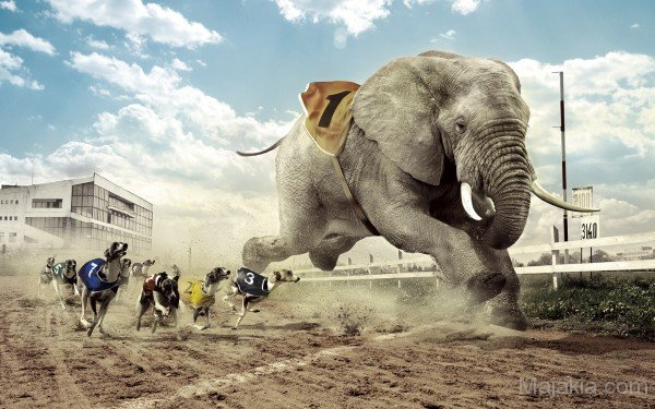 elephant-running-with-dogs-600x375